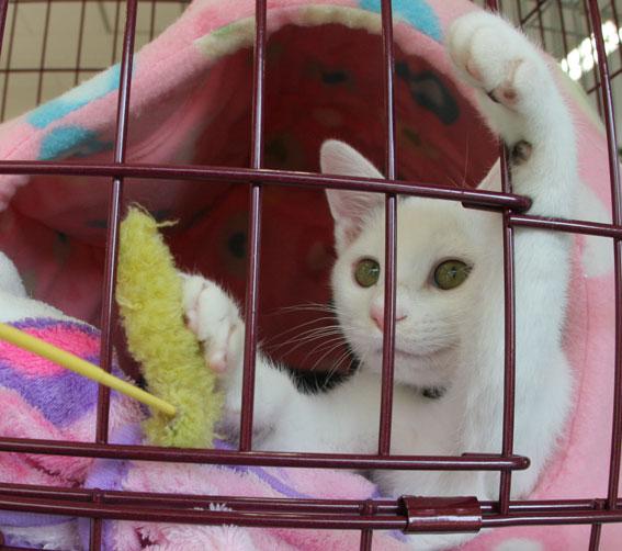 『猫譲渡会』_d0071596_21432192.jpg