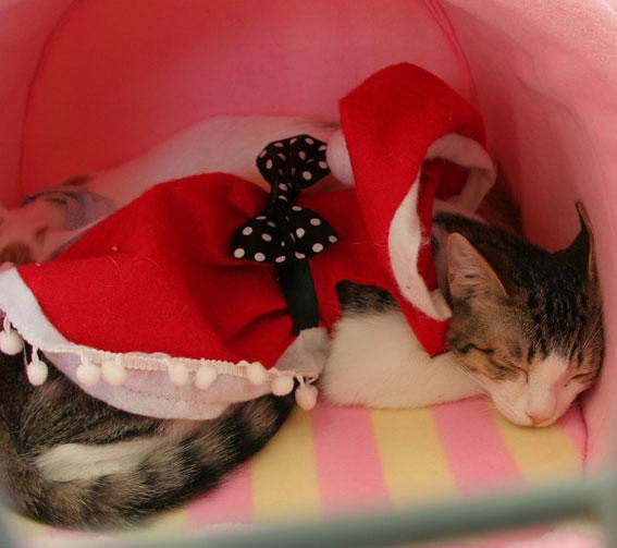 『猫譲渡会』_d0071596_21435562.jpg