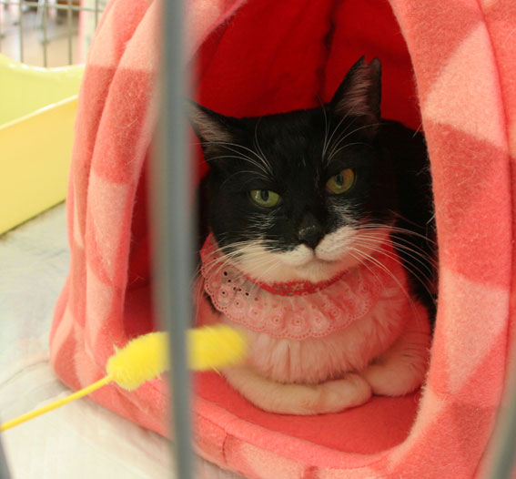 『猫譲渡会』_d0071596_21442837.jpg