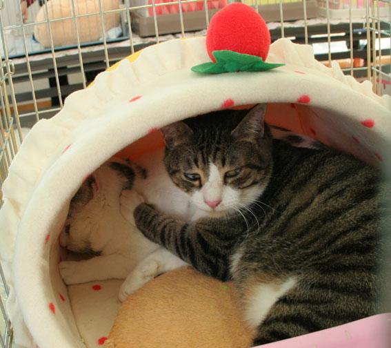 『猫譲渡会』_d0071596_2145355.jpg