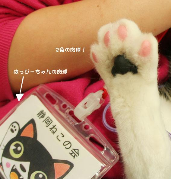 『猫譲渡会』_d0071596_21484137.jpg