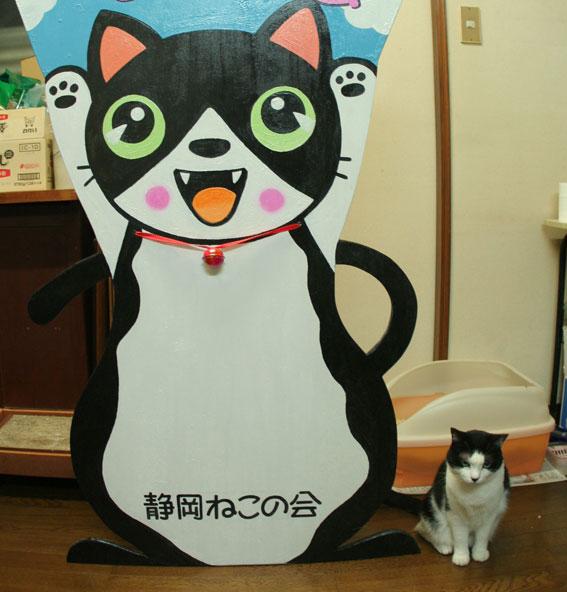 『猫譲渡会』_d0071596_21564686.jpg