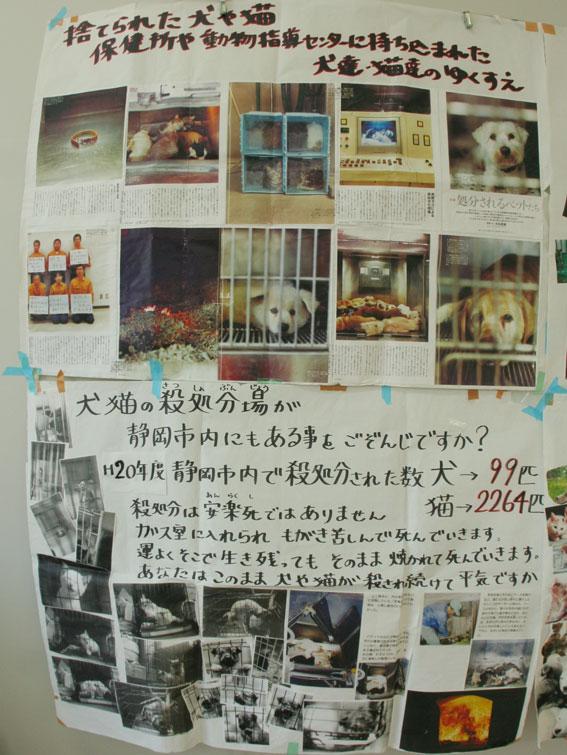 『猫譲渡会』_d0071596_2271090.jpg