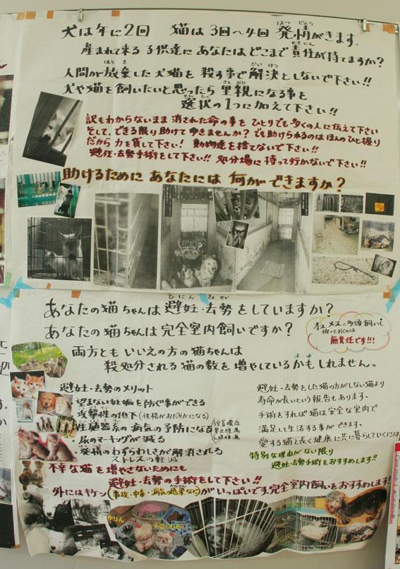 『猫譲渡会』_d0071596_2272784.jpg
