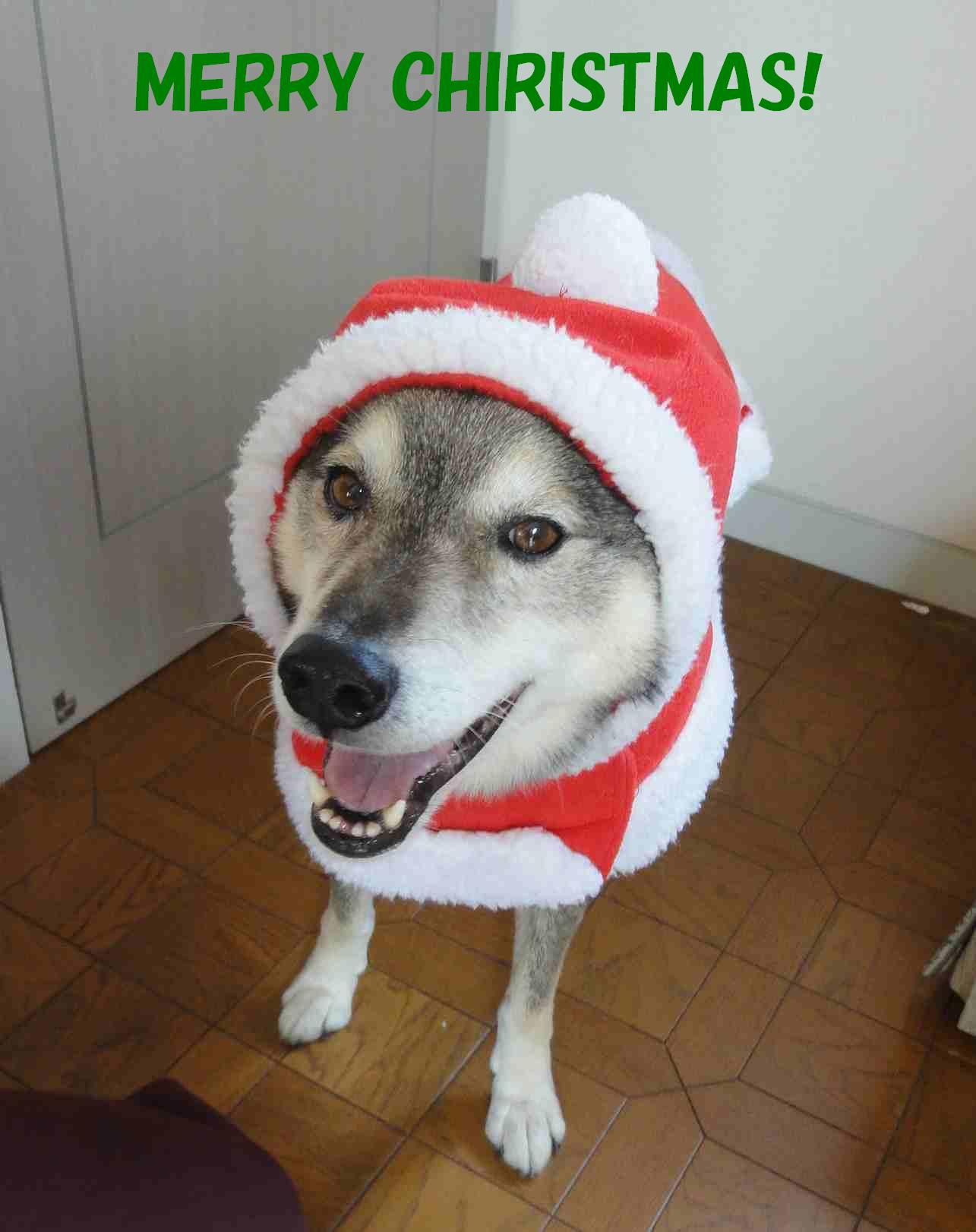 遼のクリスマス☆徐庶ちんと一緒_b0207320_21333355.jpg