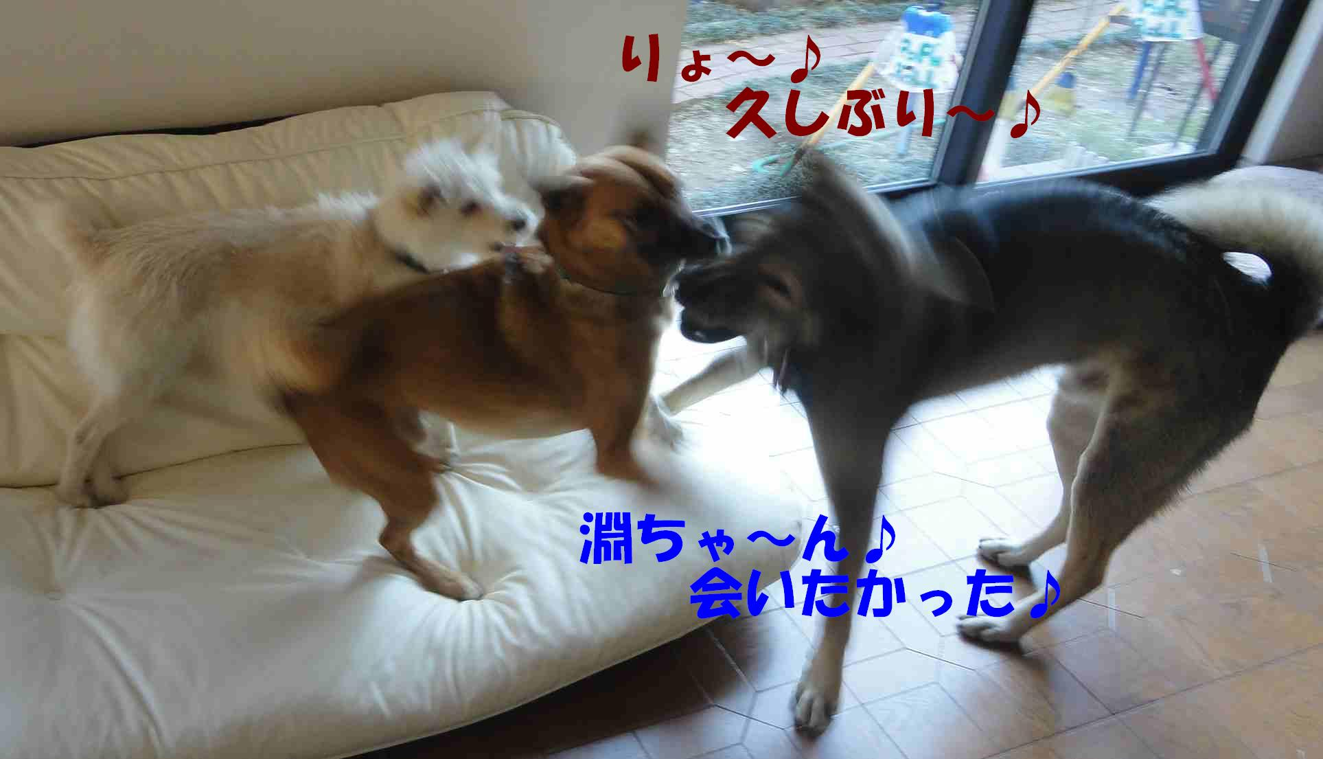 遼のクリスマス☆徐庶ちんと一緒_b0207320_22101951.jpg
