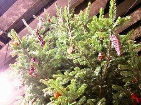 メリークリスマス!そして楽しいマーケット!_d0104926_17433250.jpg