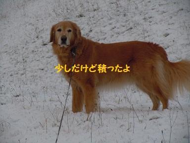 f0114128_203287.jpg