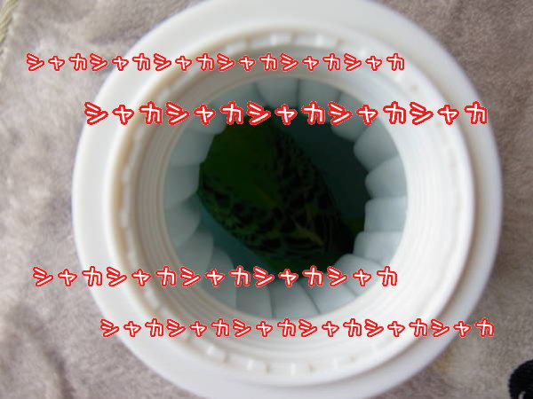 d0246634_14483552.jpg