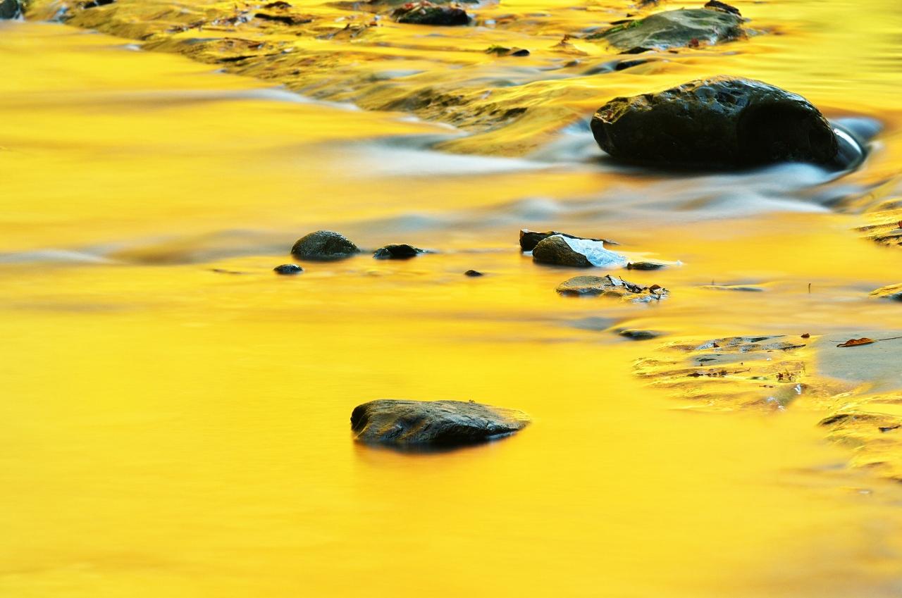 黄金色の小さな秋_f0018464_8223647.jpg
