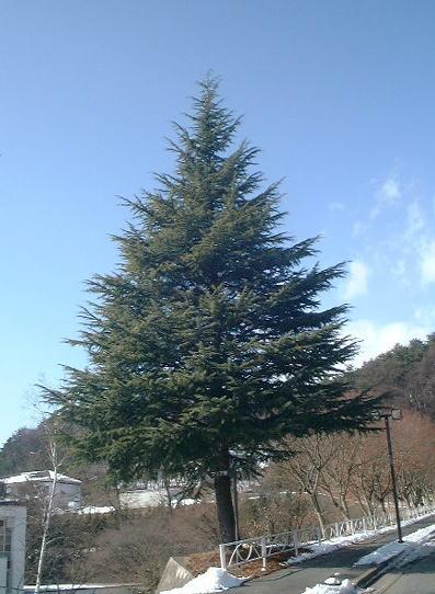 クリスマスツリーとキリスト_c0108065_17542195.jpg