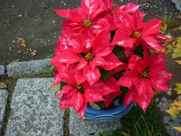 クリスマスイヴ_d0105967_22213462.jpg