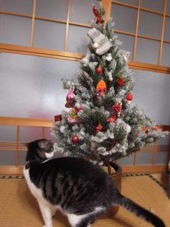 メリークリスマス☆_a0168068_16275935.jpg