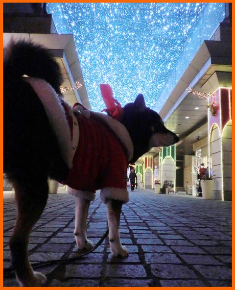 静香達のクリスマス・イブ。聖夜のイルミネーション_e0236072_2130556.jpg