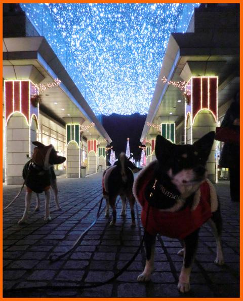 静香達のクリスマス・イブ。聖夜のイルミネーション_e0236072_21455254.jpg