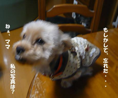 b0127675_1151851.jpg