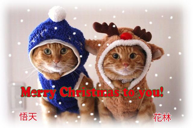 Merry Christmas♪_d0071596_21532032.jpg