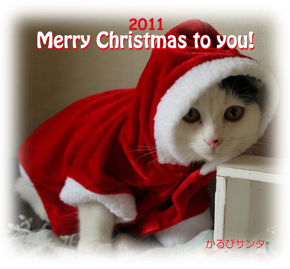Merry Christmas♪_d0071596_2153371.jpg