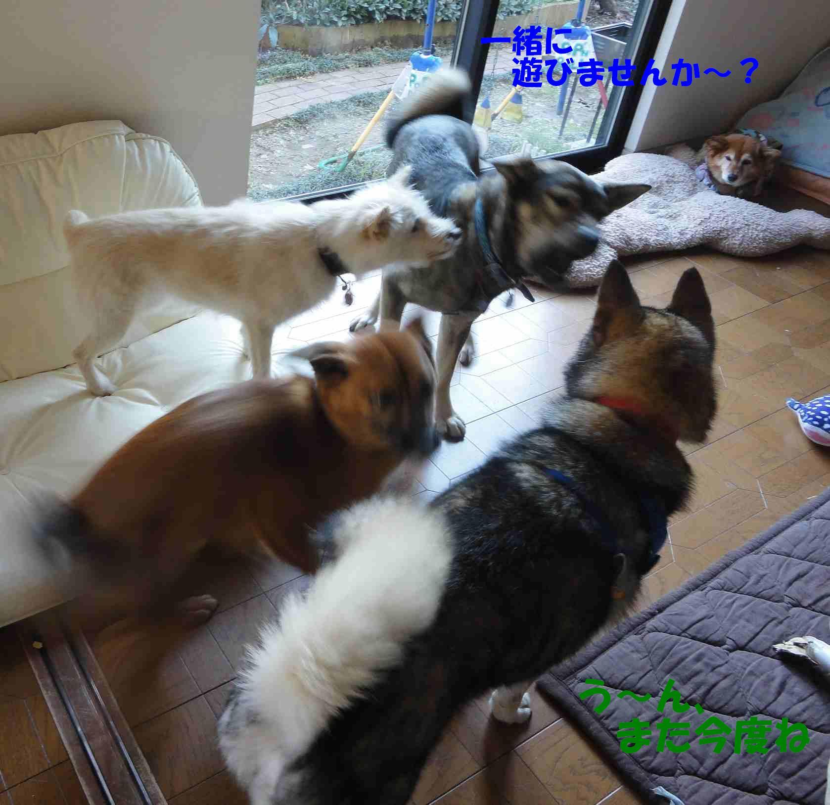 遼のクリスマス☆徐庶ちんと一緒_b0207320_2112247.jpg