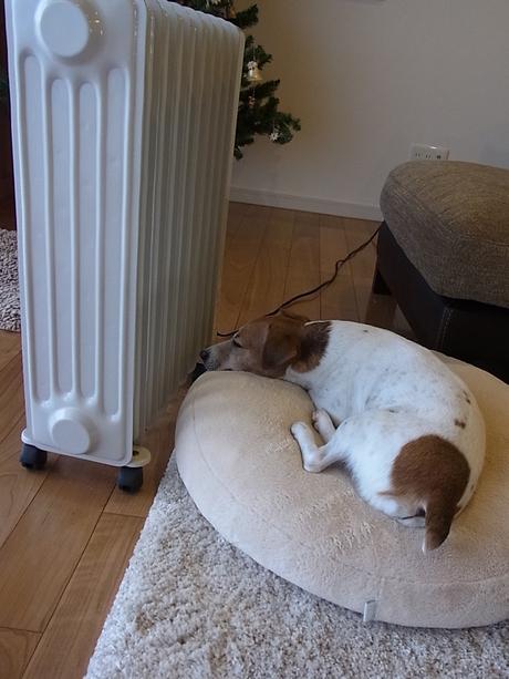 犬とヒーター_d0143957_2033824.jpg