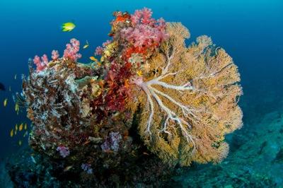12月21日~12月25日 Similan & Surin X\'mas Cruise  _d0086871_18435673.jpg
