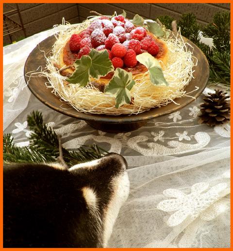 静香家のクリスマス。クリスマス・コスプレ楽しかった!_e0236072_14333383.jpg