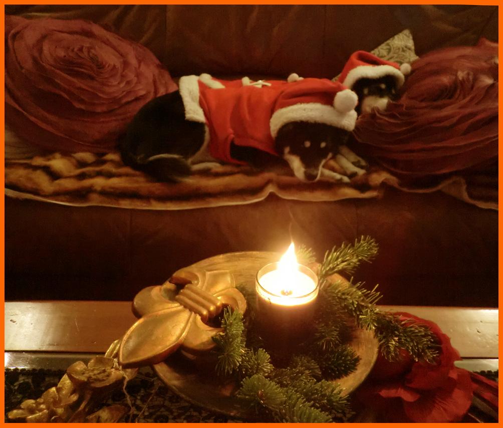 静香家のクリスマス。クリスマス・コスプレ楽しかった!_e0236072_1445375.jpg