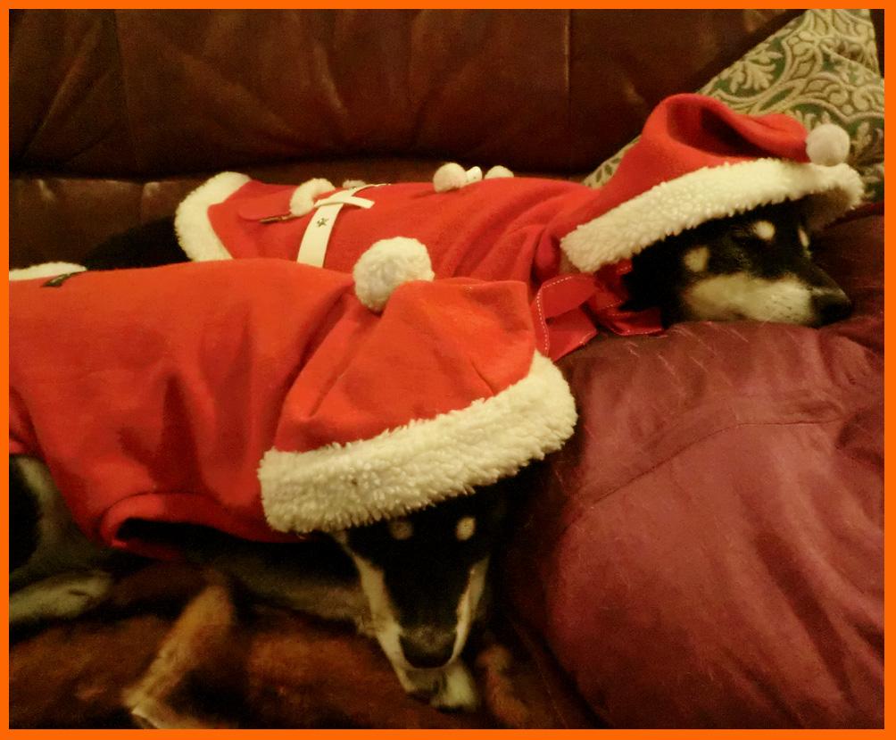 静香家のクリスマス。クリスマス・コスプレ楽しかった!_e0236072_1447151.jpg