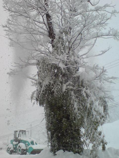 大雪のホワイトクリスマス。_d0182179_17293730.jpg