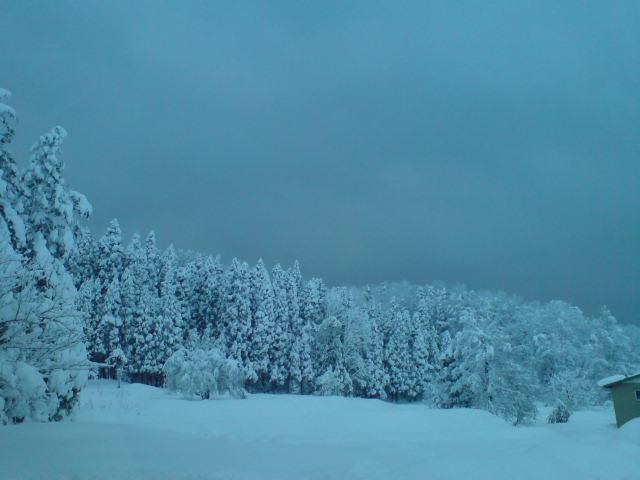 大雪のホワイトクリスマス。_d0182179_17404825.jpg