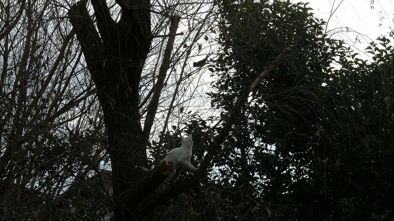 【 日記 12/25 】 ここまでおいで! (鴻沼川シリーズ)_a0185081_2243586.jpg