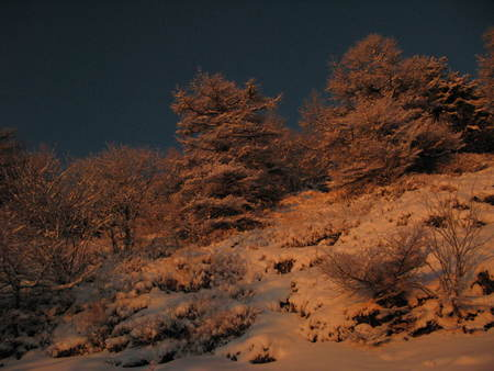 ホワイトクリスマス_e0120896_10365363.jpg