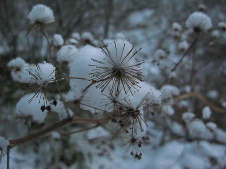 ホワイトクリスマス_e0120896_10421744.jpg