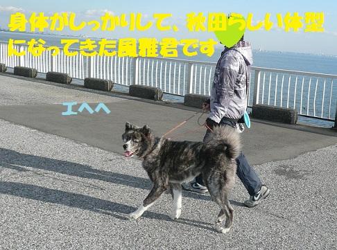 f0121712_1419941.jpg