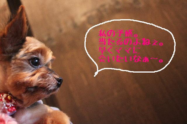 b0130018_0365027.jpg
