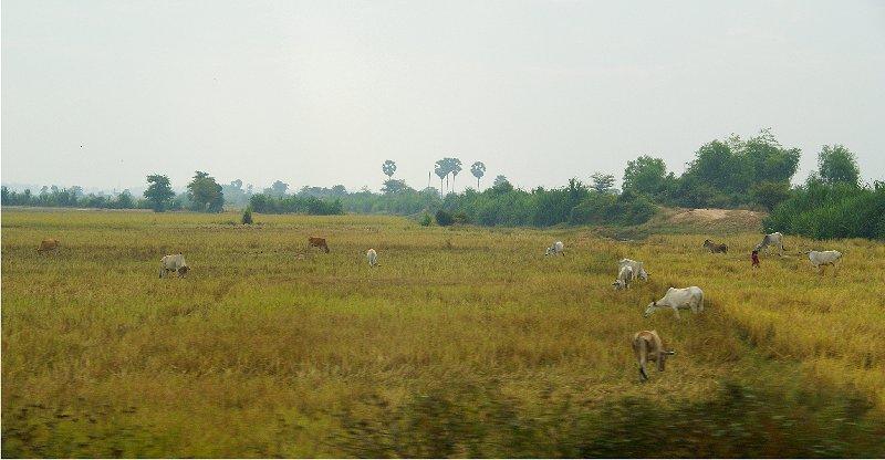 1753 ぶらりカンボジア(2)ひろびろ湿原_b0211627_19404313.jpg