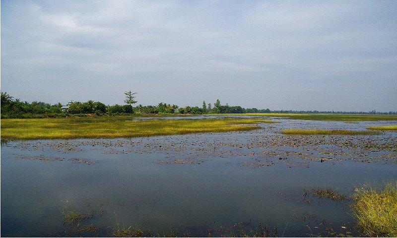 1753 ぶらりカンボジア(2)ひろびろ湿原_b0211627_20362225.jpg
