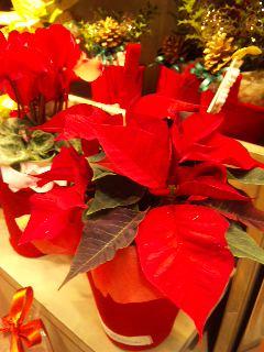 メリークリスマス_a0103940_033335.jpg