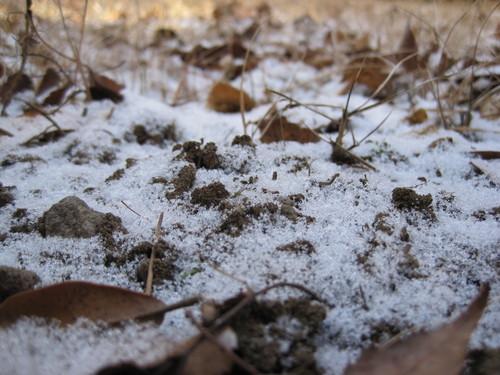 霜ばしら 九重本舗・玉澤_f0236260_12102472.jpg