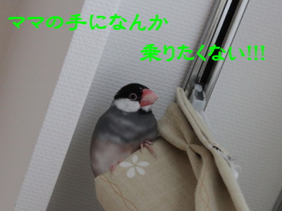 b0158061_0593560.jpg