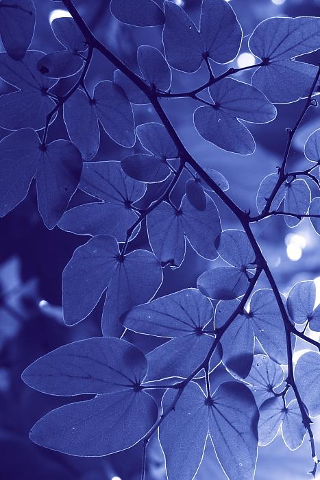 ■■ Leaf decoration ■■_c0195662_21293160.jpg