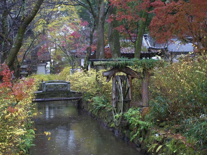 紅葉 2011  松尾大社_f0021869_0433580.jpg
