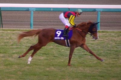 魅せた三冠馬の底力!オルフェーヴルが重賞6連勝で豪華メンバーの有馬記念を制す!_b0015386_2484491.jpg