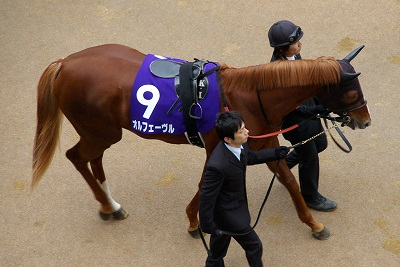 魅せた三冠馬の底力!オルフェーヴルが重賞6連勝で豪華メンバーの有馬記念を制す!_b0015386_335835.jpg