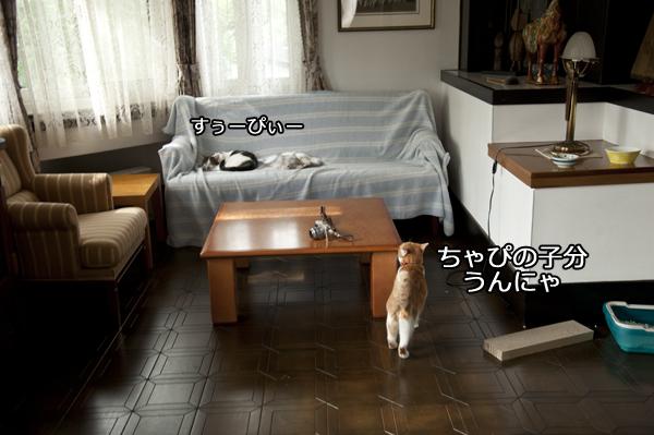 b0141397_1055815.jpg