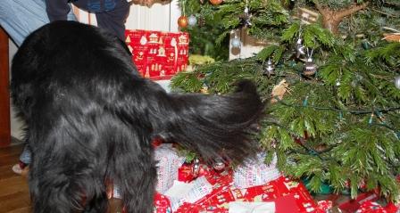 2011年クリスマス♪_d0104926_28961.jpg