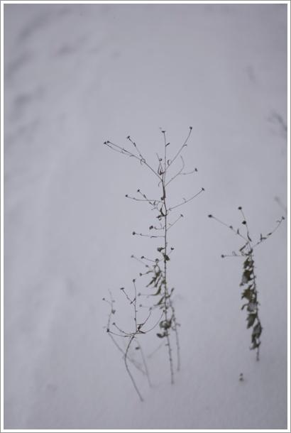 snow_c0157248_175991.jpg