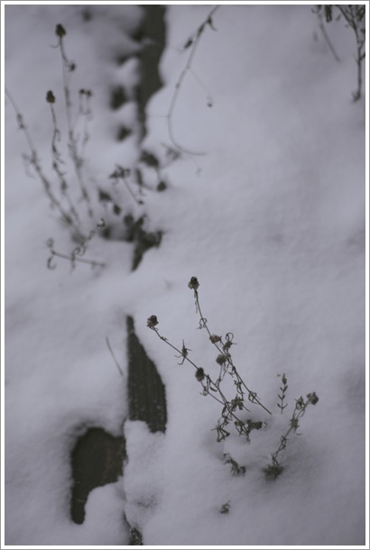 snow_c0157248_18178.jpg