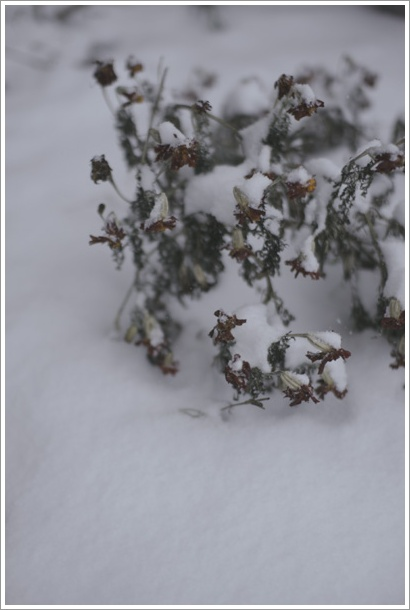 snow_c0157248_18997.jpg