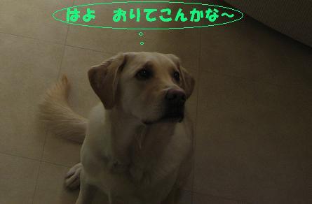 c0117058_18595953.jpg